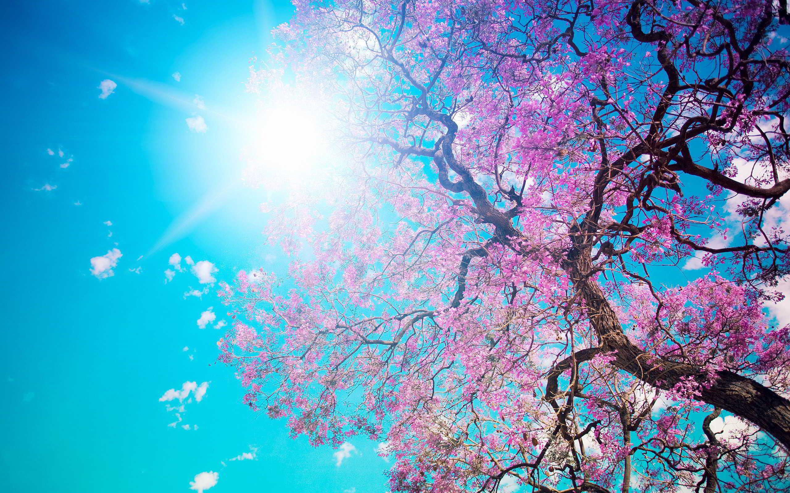 Feliz comienzo de la primavera